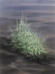 Payer, Wieland:    BIOTOB; 2018, Pastellund Kohle auf MDF, 800 x 600 mm,        Foto: Herbert Boswank