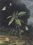 Payer, Wieland:  BIOTOP II; 2019, Pastell, Aquarell und Kohle auf grundiertem MDF,  30 x 22 cm        Foto: Herbert Boswank