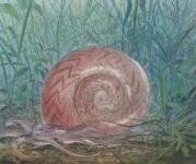 Payer, Wieland:  SCHNECKE; 2019, Pastell, Aquarell und Kohle auf grundiertem MDF,  22 x 18,5 cm        Foto: Herbert Boswank